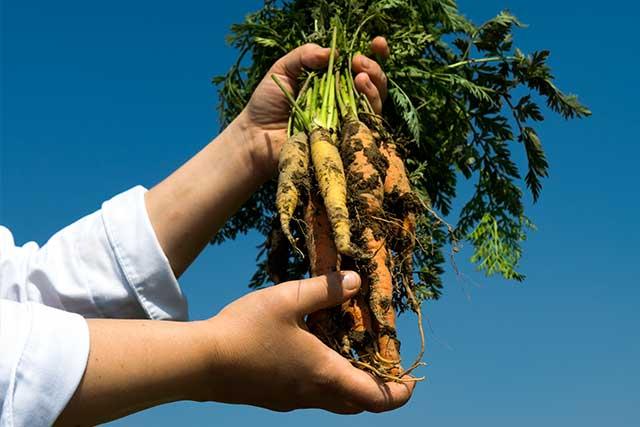 Stratford Chef School new cookbook 'Farm to Table'